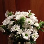 Bouquet of White Daisies-2