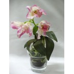 Orchid - Cattleya (in Glass Pot) Pale Pink