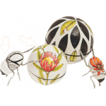 protea%20flower%20and%20infinity%20dung%20beetle1-150x150